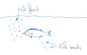 Aquaponics fish biomass