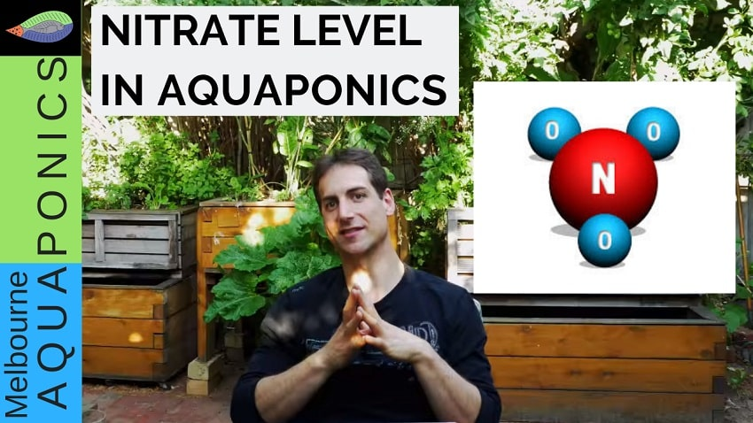 What is a good nitrate level in aquaponics?