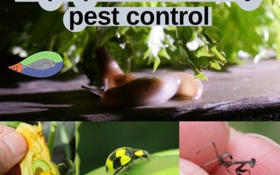 Aquaponics pest control