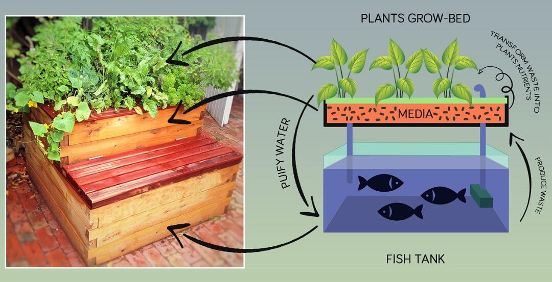 Flood and drain aquaponics