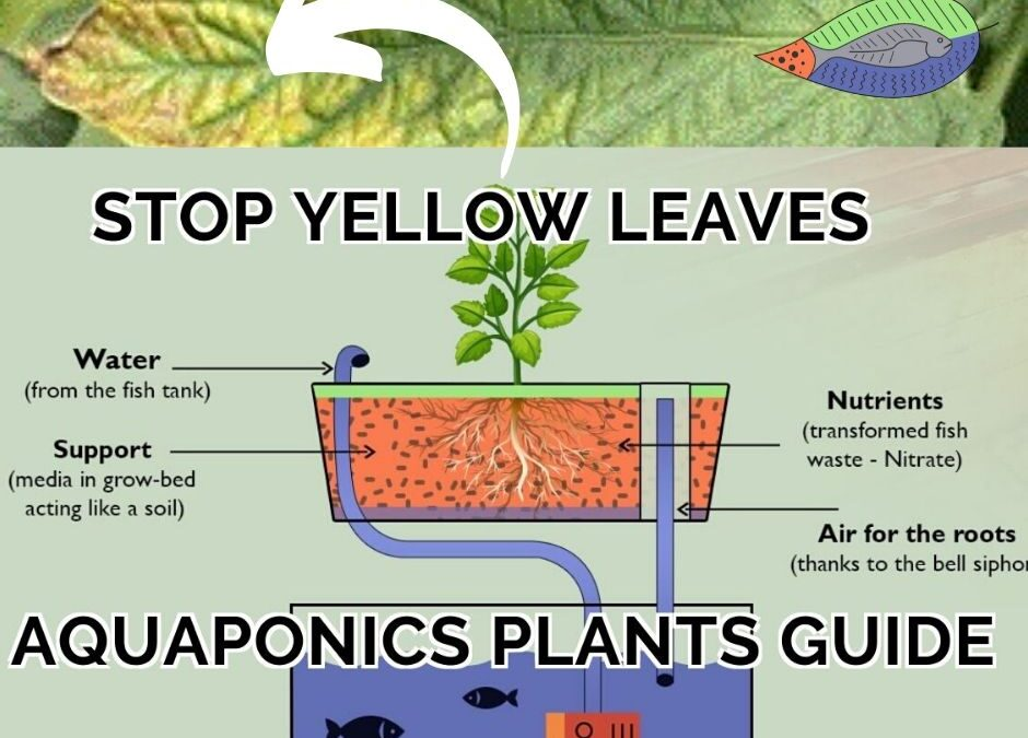 Aquaponics plants guide