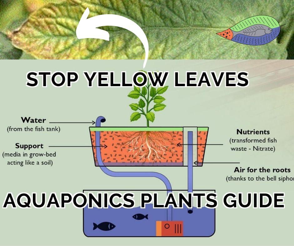 Aquaponics plants guide