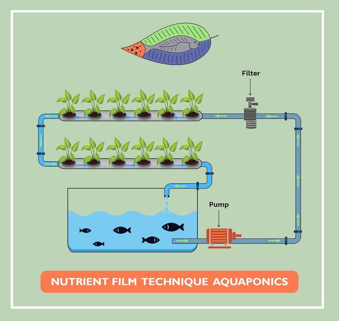 Nutrient-Film-Technique-Aquaponics
