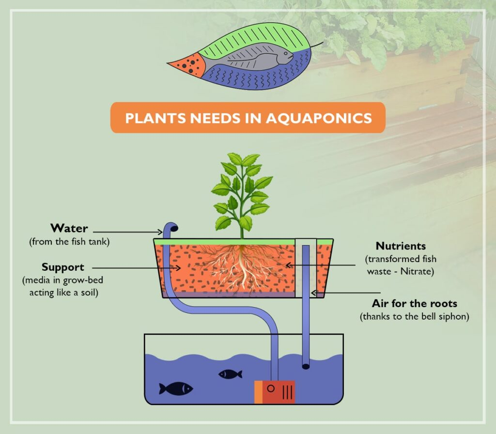Plants needs in aquaponics