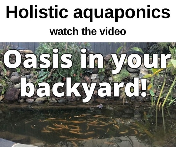 Holistic aquaponics, the system of my dreams!