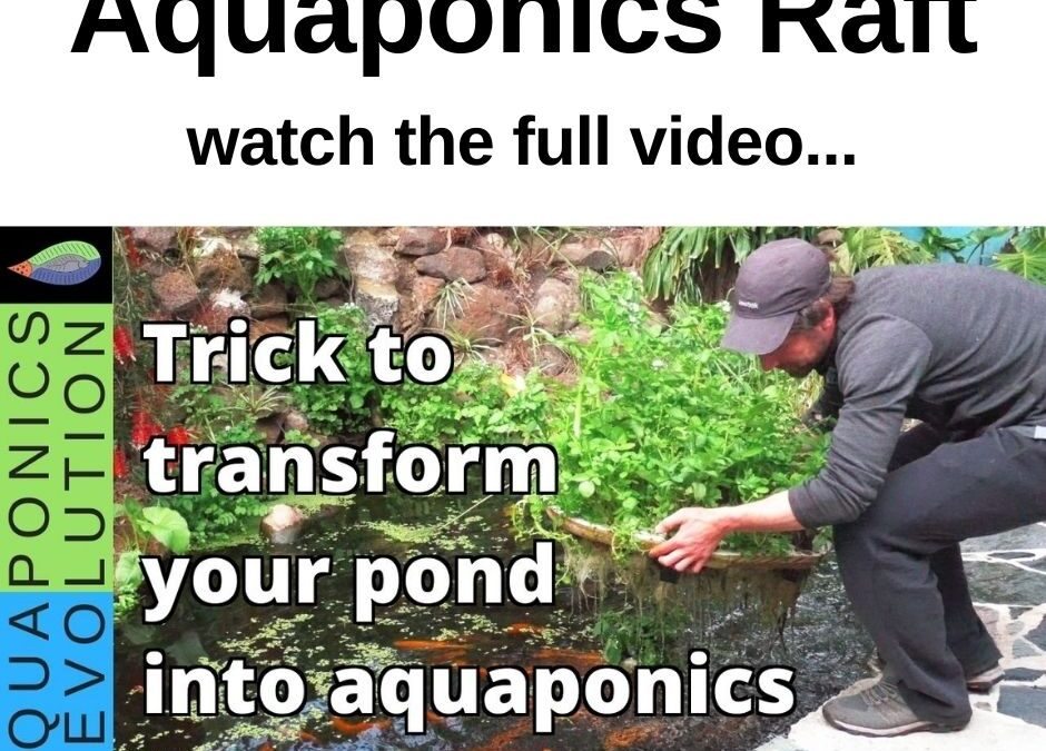 Aquaponics raft | Transform your fish pond