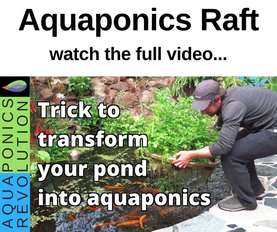 Aquaponics raft